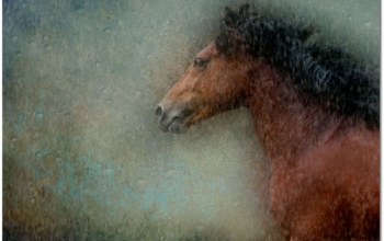 Unbridled Horse Pigment Ink Print on Rice Paper with Resin