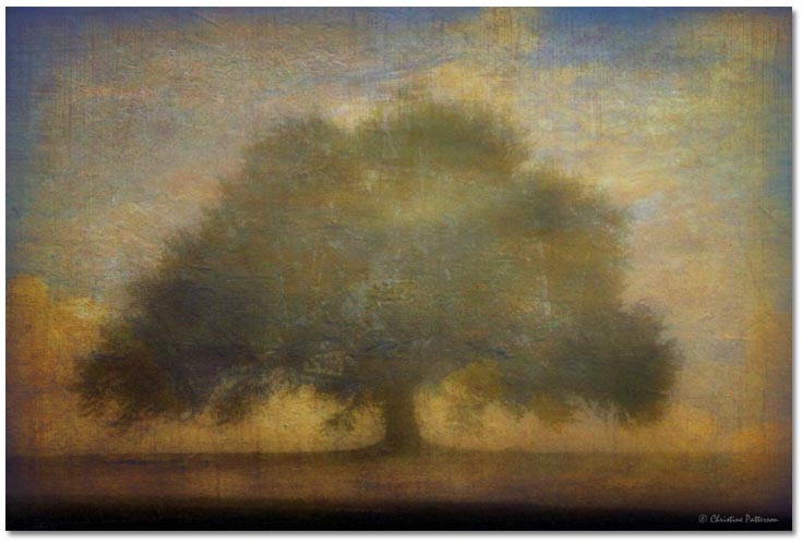 The Giving Tree Christine Patterson
