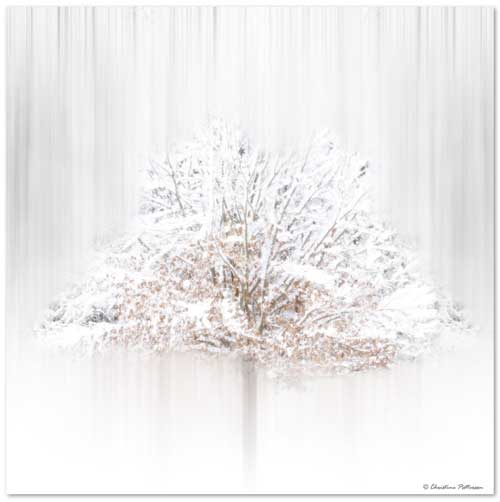 White Tree Enlightment Rice Paper Encaustics